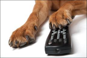 Dog Barking at the Television