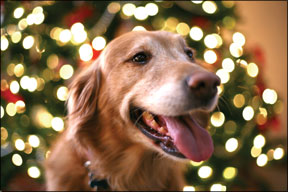 Keep Your Dog Safe This Holiday Season