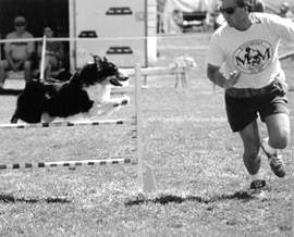 dog agility competition