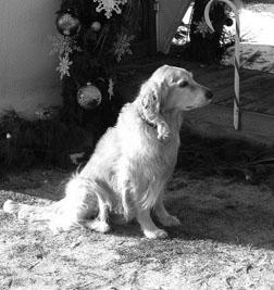 dog cancer treatment alternatives