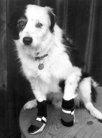 The Best (and Worst) Dog Boots