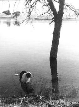 lakewater carries giardia