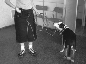 professional dog behaviorist