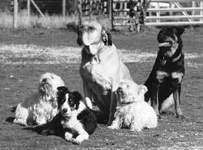 Multi-Dog Household