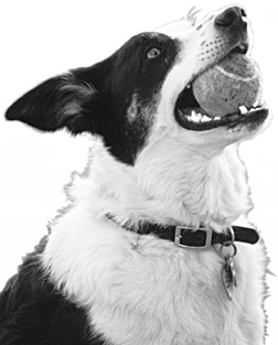 Your Dog's Mouth