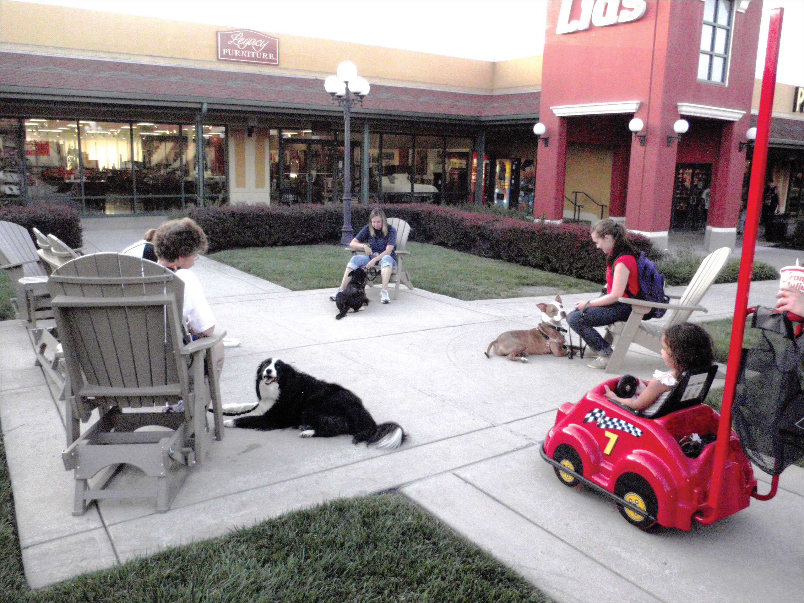 dog relaxing in crowded area