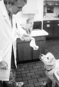 veterinarian raw feeding