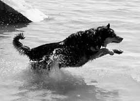 Swimming is Great Exercise for Dogs