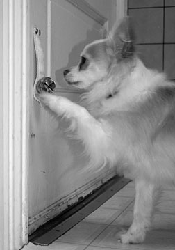 train dog to ring a doorbell