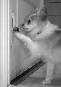 dog target training