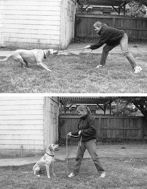 Tug-of-War With Your Dog