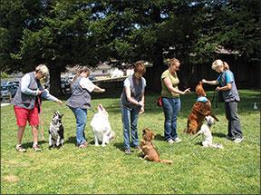 dog trick training