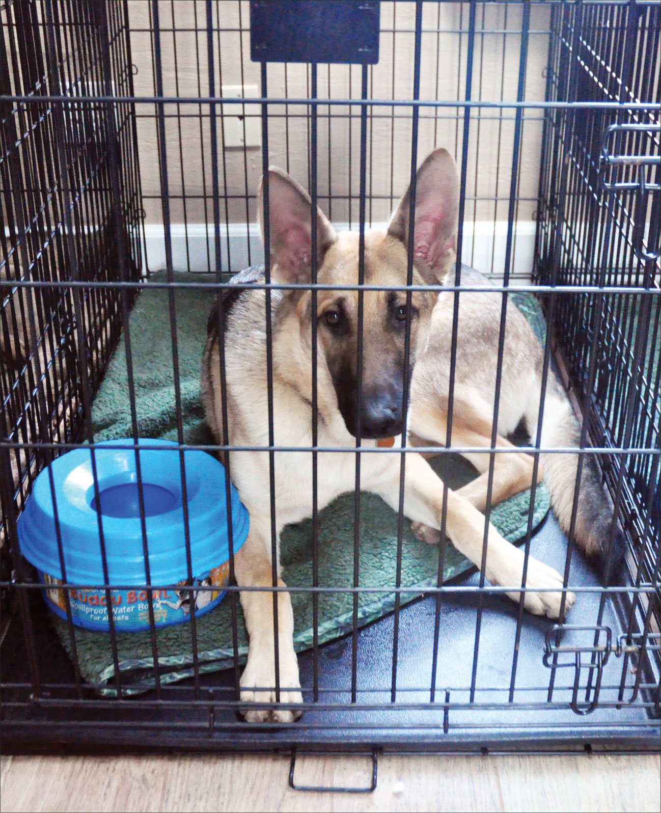 5 Things To Do If Your Dog Needs Cage Rest Whole Journal