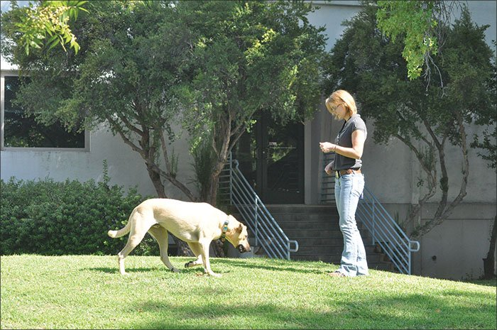 teaching dog to come