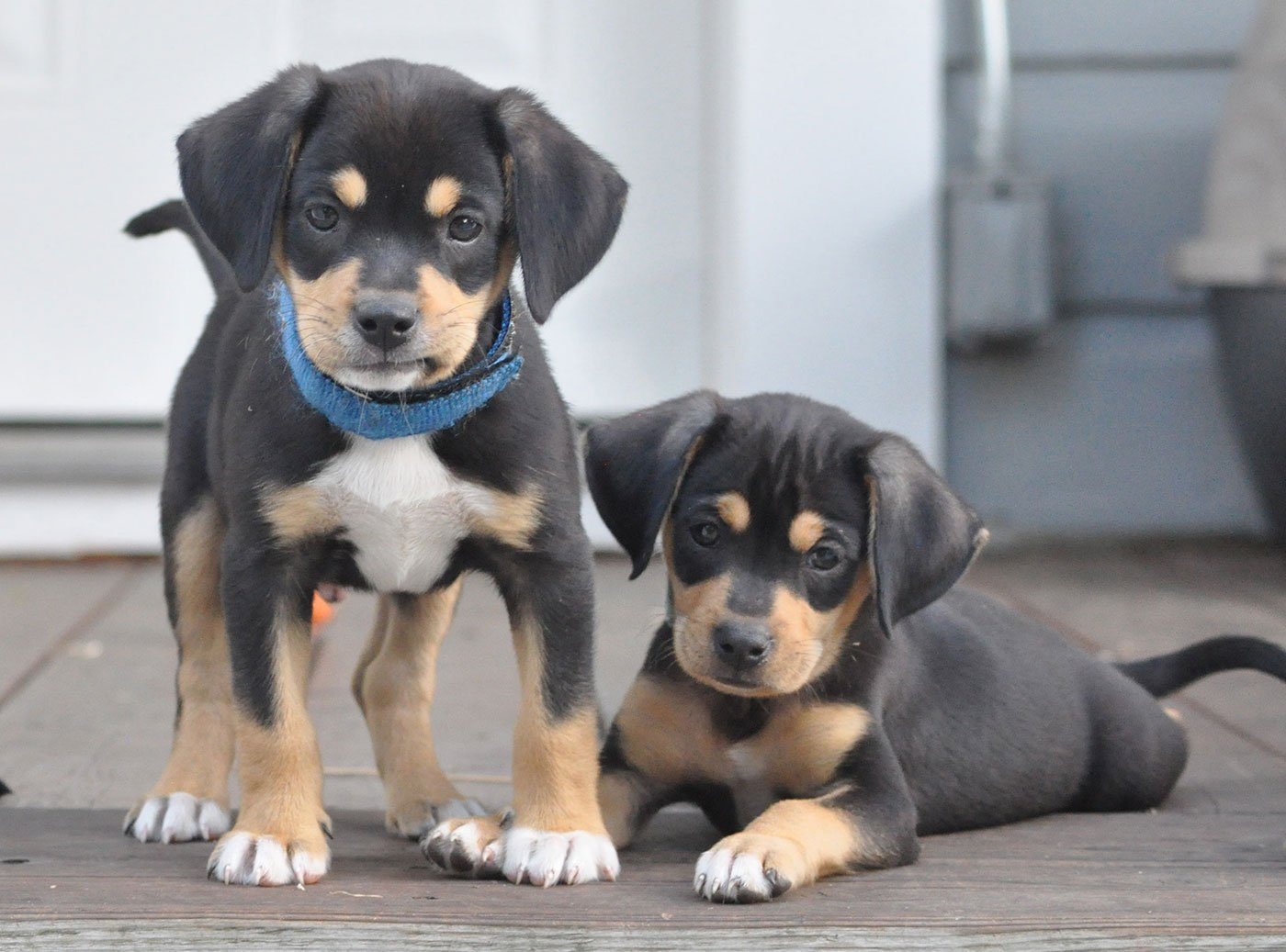 Puppy Personalities: How Much Is Inborn?
