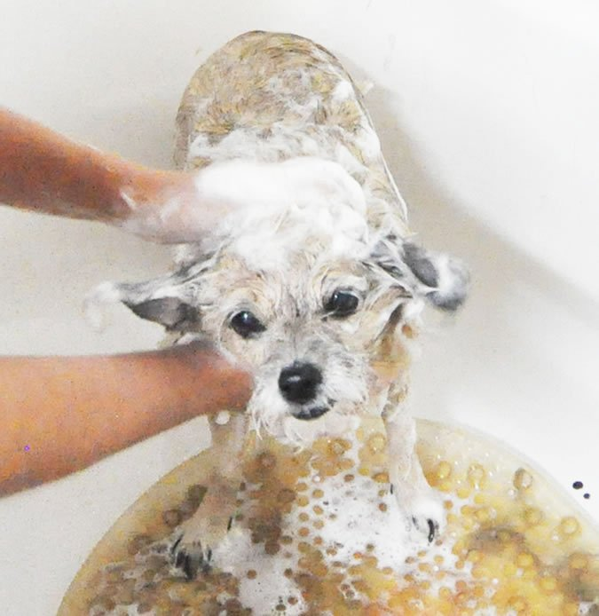 dog getting washed