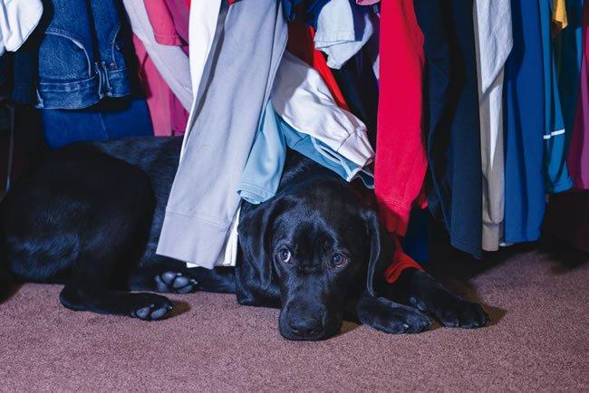 dog hiding from thunder
