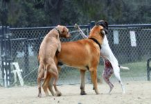How to Stop Your Dog's Annoying Humping Behavior - Whole Dog Journal