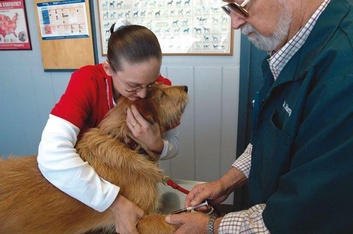 dog getting blood test