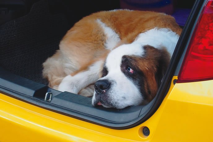 What To Do If Your Dog Gets Motion Sickness