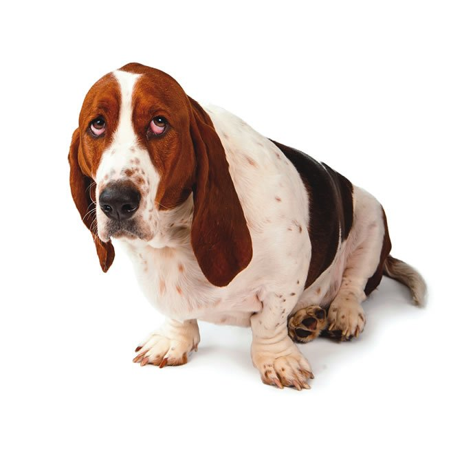 guilty dog myth