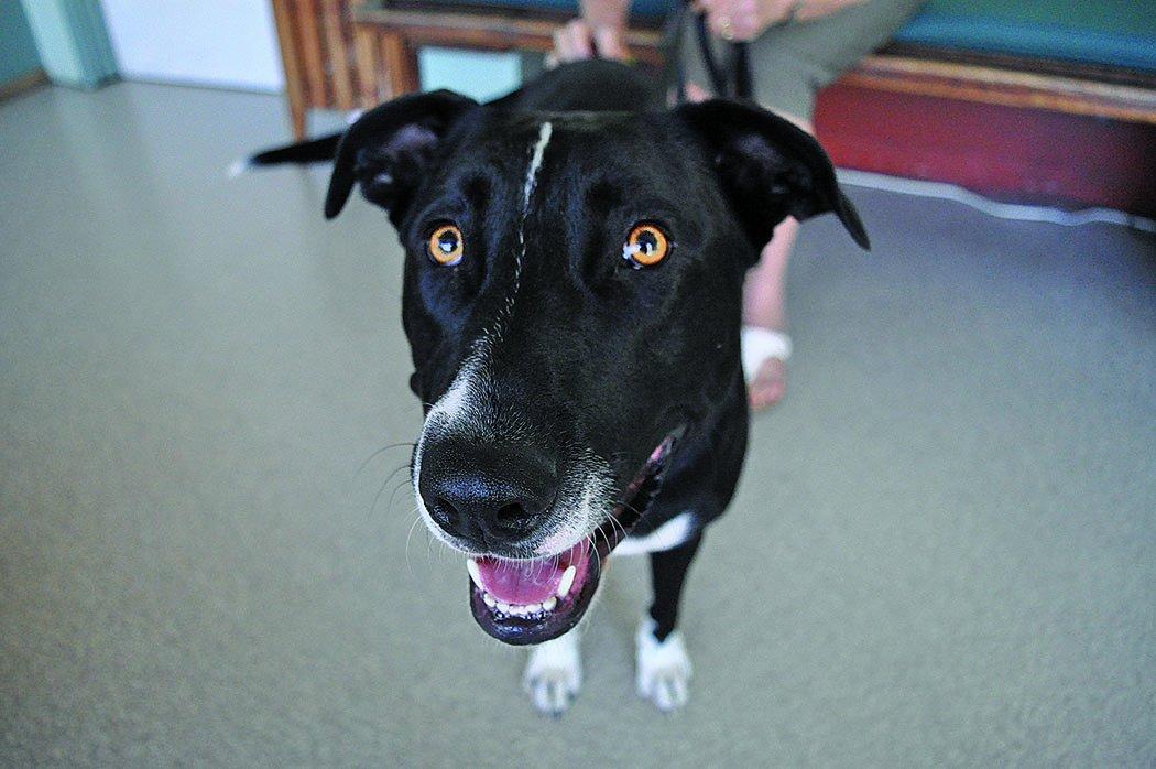 a happy dog at the veterinary clinic