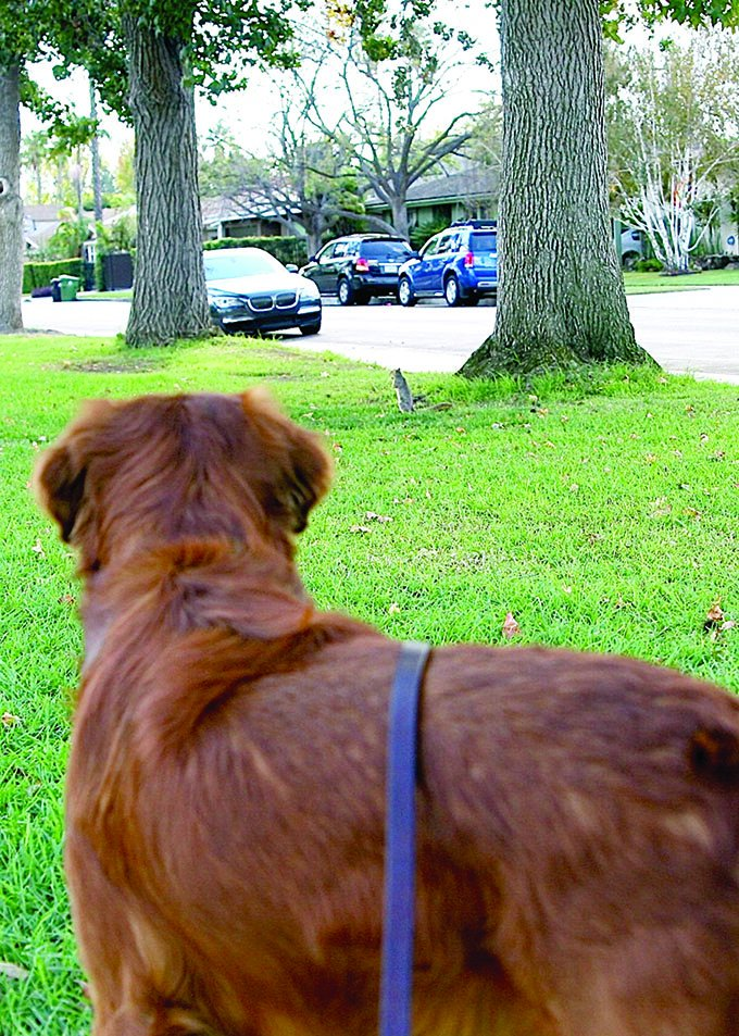 dog watching squirrel
