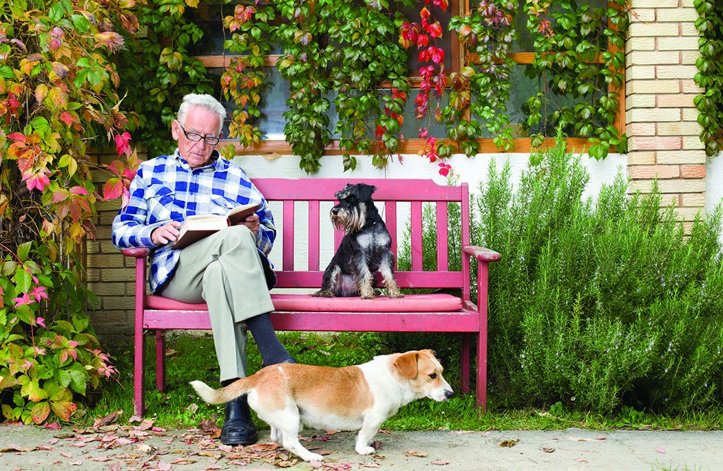 man on bench with terriers
