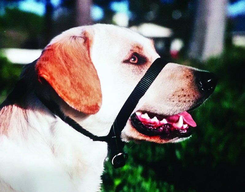 dog collar head halter