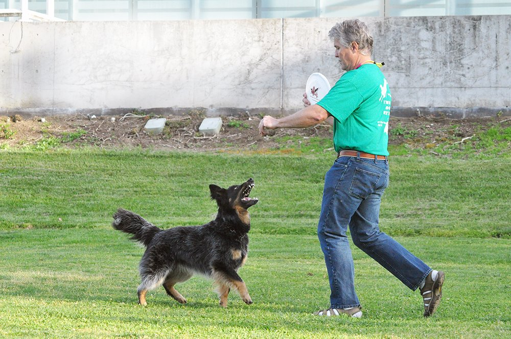 disc dog competition