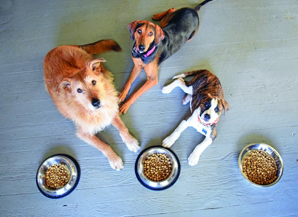 dogs with food manners