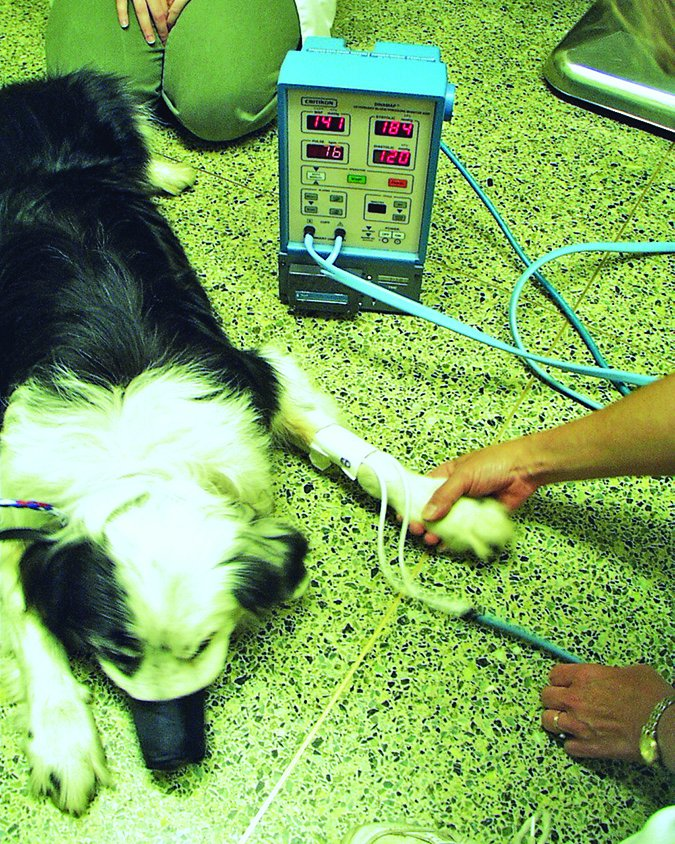 canine blood pressure test