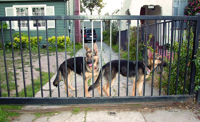 keeping your dogs contained