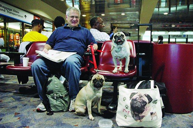pugs at airport