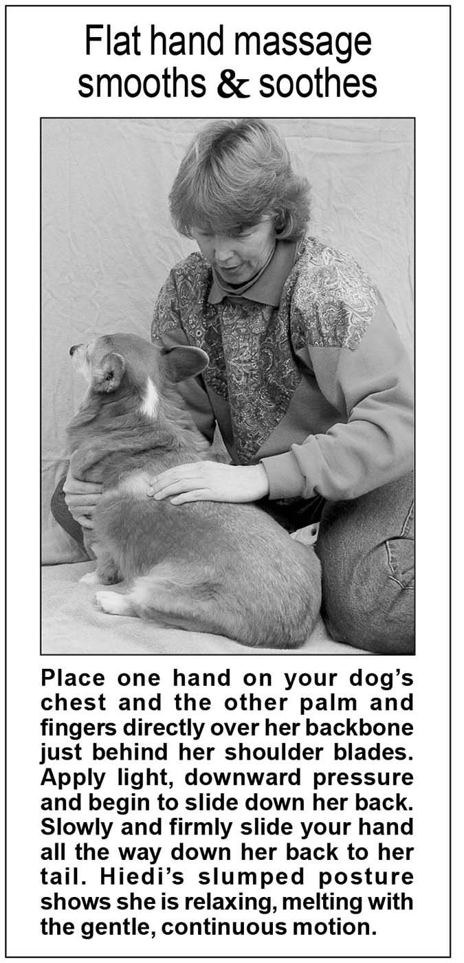 Back Massage Techniques for Dogs