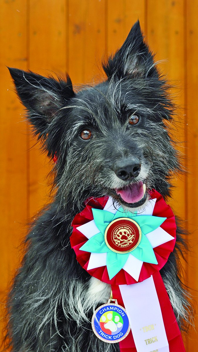 Trick Dog Champion