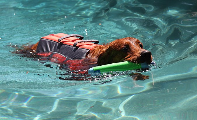 dog swimming with lifejacket