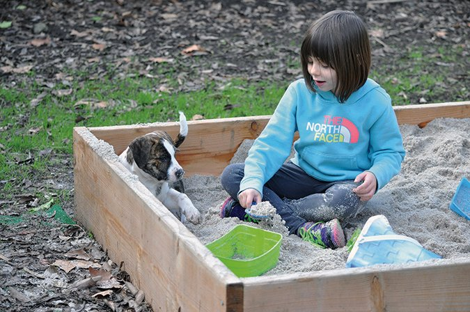girl and puppy in sandbox