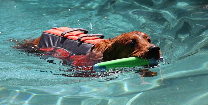 Dog wearing life jacket