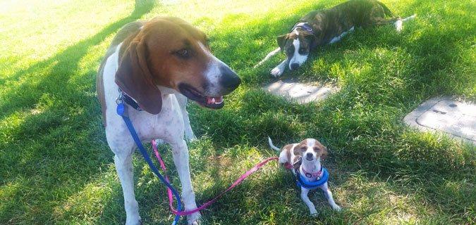 Three dogs resting