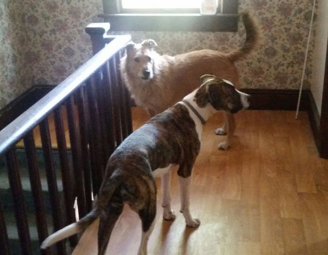 Playing Hide and Seek with the Dogs – Everybody Does It, Right?