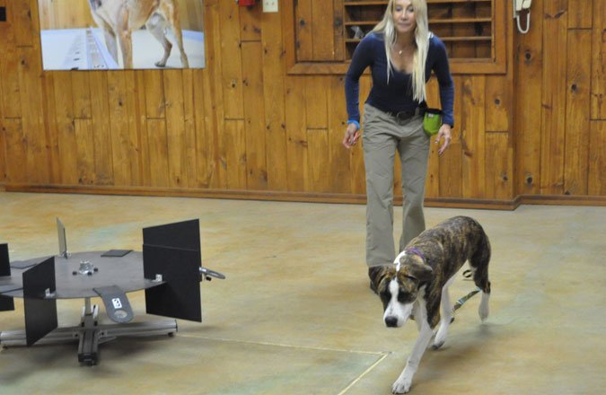Dogs Really Can Sniff Out Cancer