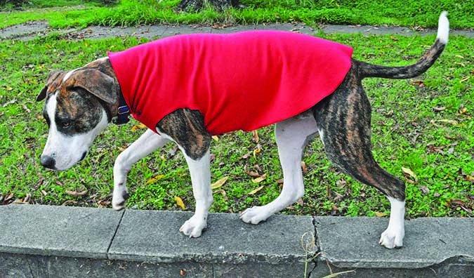 Gold Paws Stretch Fleece Coat