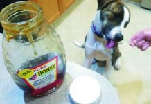 Apple Cider Vinegar for Dogs - Whole Dog Journal