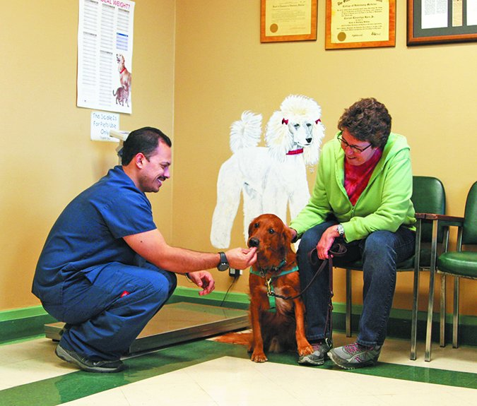 vet visits for dogs