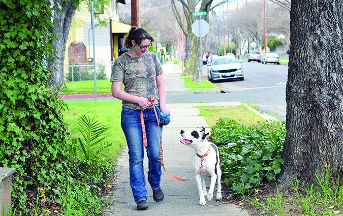 training loose leash walking