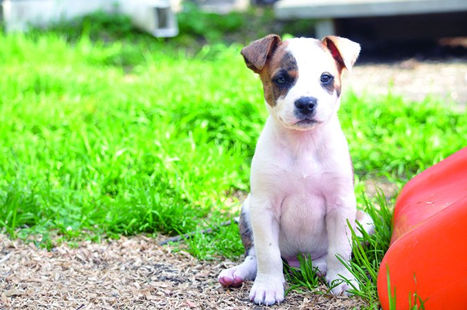 Giardiasis and Coccidiosis in Puppies - Whole Dog Journal