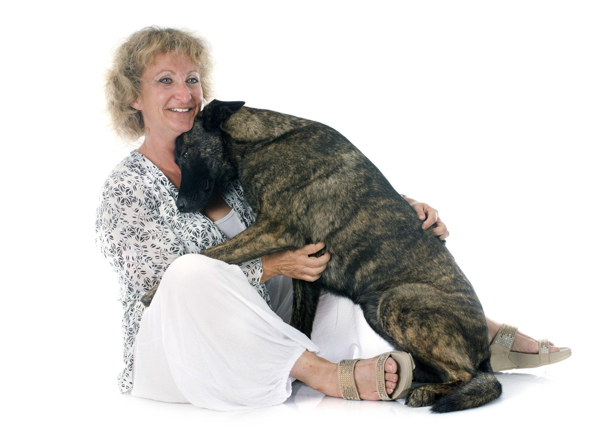 velcro dog