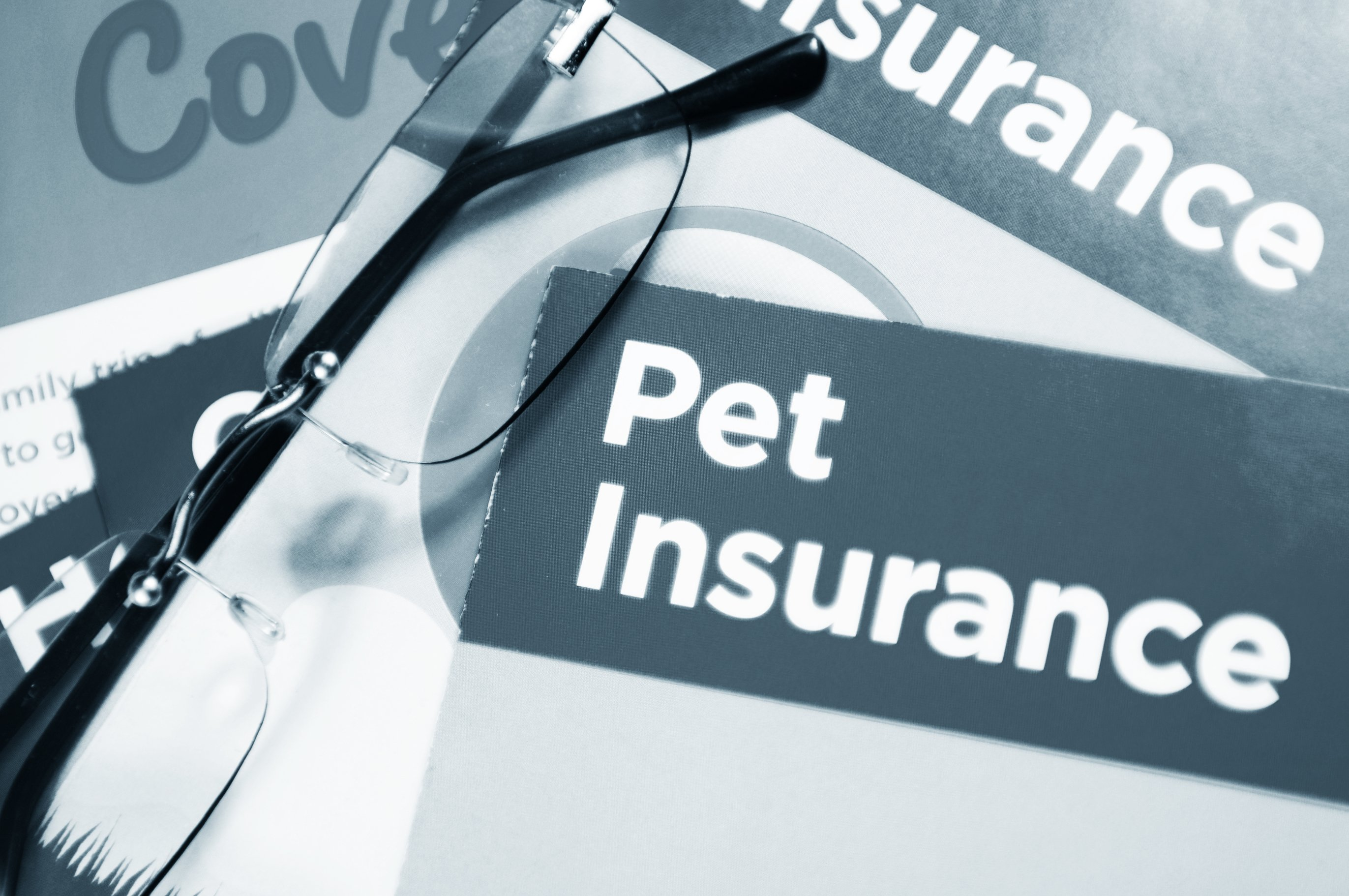 Pet Insurance for Dogs - Whole Dog Journal