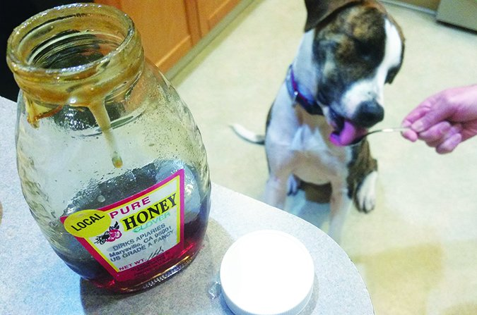 dog eating honey